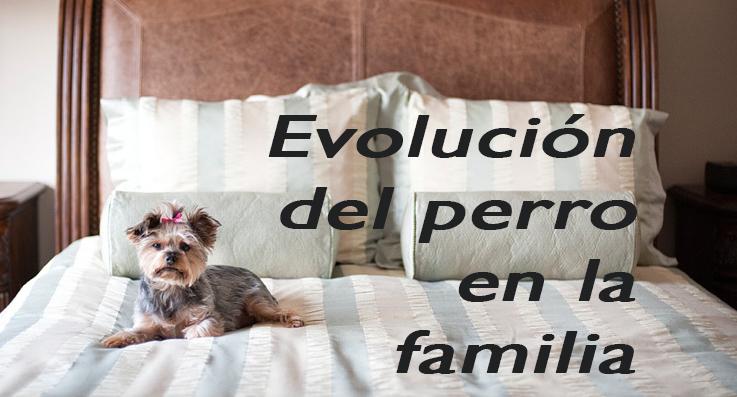 evolucion del perro en la familia